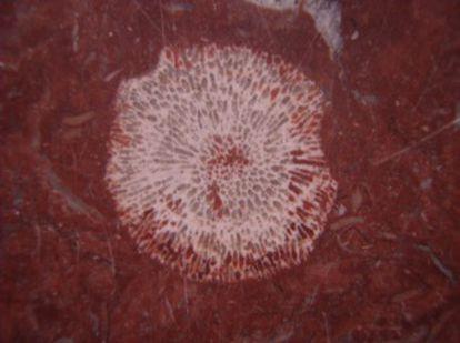 A close-up of one of the Mercado de Fuencarral coral colonies.