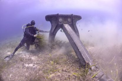 A diver shows the damage down to posidonias in Ses Salines.