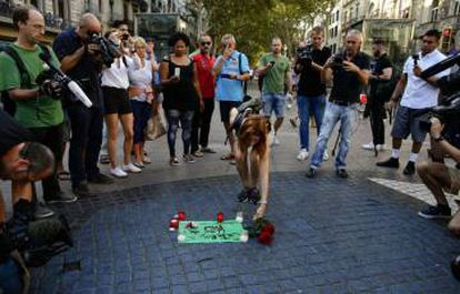 A woman places flowers on the La Rambla promenade in honor of the victims of the attack in Barcelona