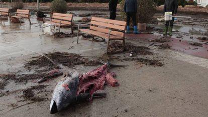 A dismembered tuna fish in l'Ampolla.