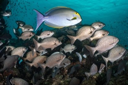 The expanded reserve aims to grant greater protection to the marine life in Coiba.
