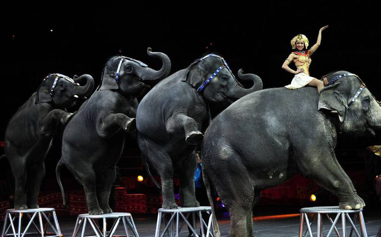 The Ringling circus in New York, 2010.