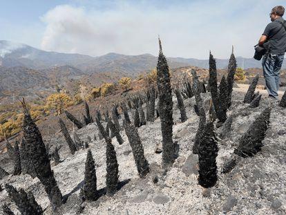 A razed area of Sierra Bermeja following the blaze.