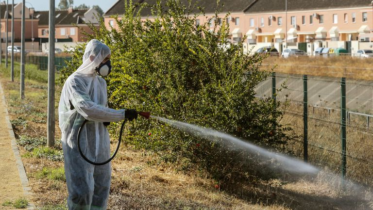 Fumigation in Coria del Río by the local council last weekend in a bid to stop the spread of the West Nile virus.
