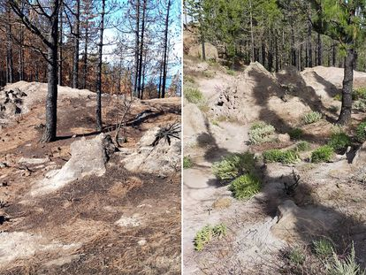 Before and after the 2019 wildfire that ravaged Tamabada natural park in Gran Canaria.