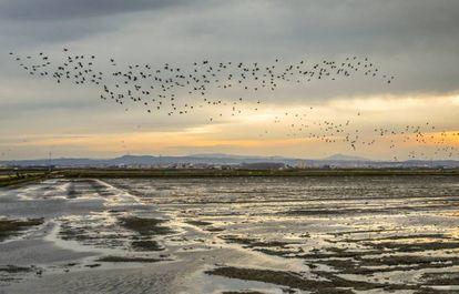 Birds fly over La Albufera natural park.