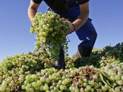 A worker at a vineyard in Los Llanos, Ciudad Real province.