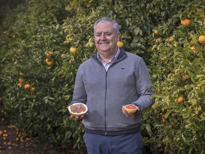 Biologist Manuel Talón with a grapefruit at the Valencian Institute of Agricultural Research in 2018.