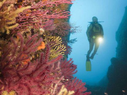 Corals along the Costa Brava in Spain.