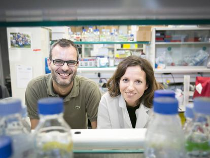 IRB researchers Salvador Aznar and Gloria Pascual.