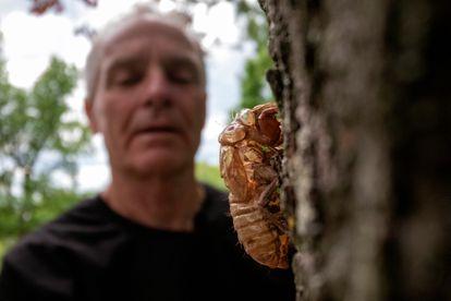 Entomologist Michael Raupp with a cicada at Maryland University.