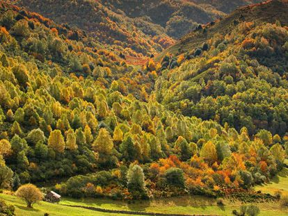 Autumn colors in the Fuentes del Narcea natural park in Degaña and Ibias, Asturias.