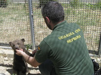 Seprona officer helps small animal.