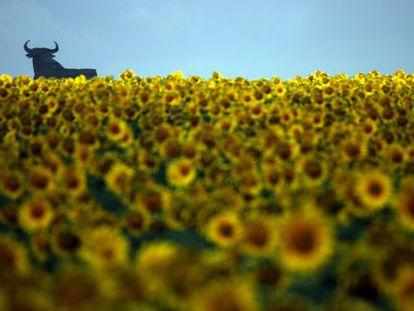 An Osborne bull advertising board in a sunflower field in Andalusia.