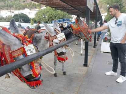Some of the donkeys used for the ride service in Mijas.