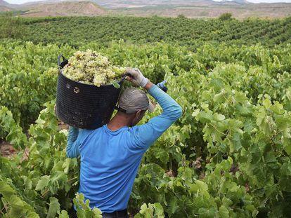 Vineyards in La Rioja region.