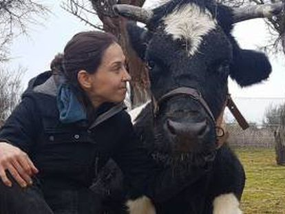 Carmen will live to moo another day.