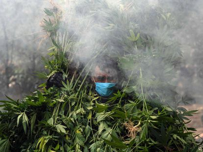 Mexican soldiers destroy a marihuana plantation in Tecate.