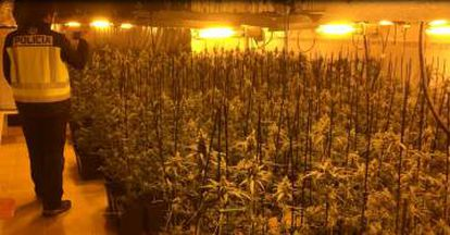 A marijuana grow house raided by Spain's National Police.