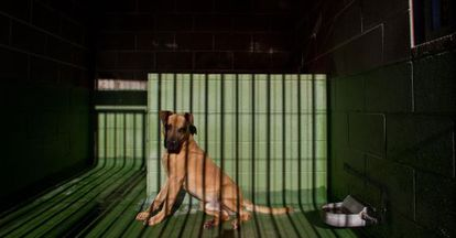 Convicted animal abusers face three months to a year in prison.