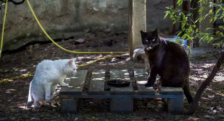 Street cats in a managed colony in the Barcelona sububur of Vallcarca.
