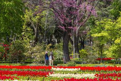 Two visitors in Madrid's Royal Botanical Garden.