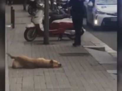 Municipal authorities say the officer acted in self-defense after the animal bit him, but some eyewitnesses say he was not attacked
