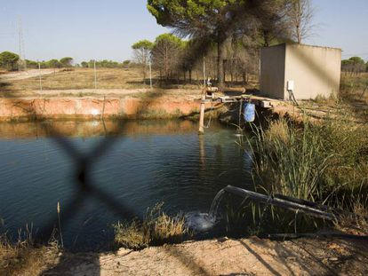 An illegal water deposit used for irrigation around Doñana.