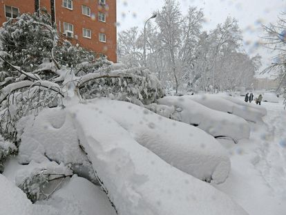 Fallen trees in Madrid on Saturday.