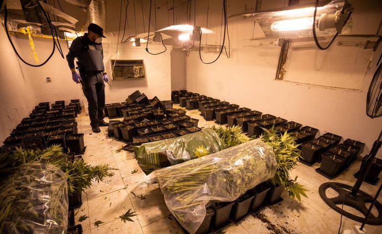 The Civil Guard raids a property with cannabis plants on the outskirts of Granada.