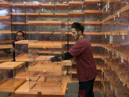 Ballot boxes inside a warehouse in Barcelona.