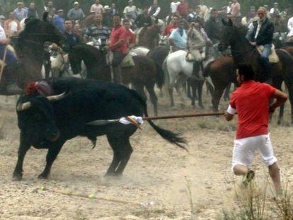 Bull getting lanced at Toro de la Vega 2006.