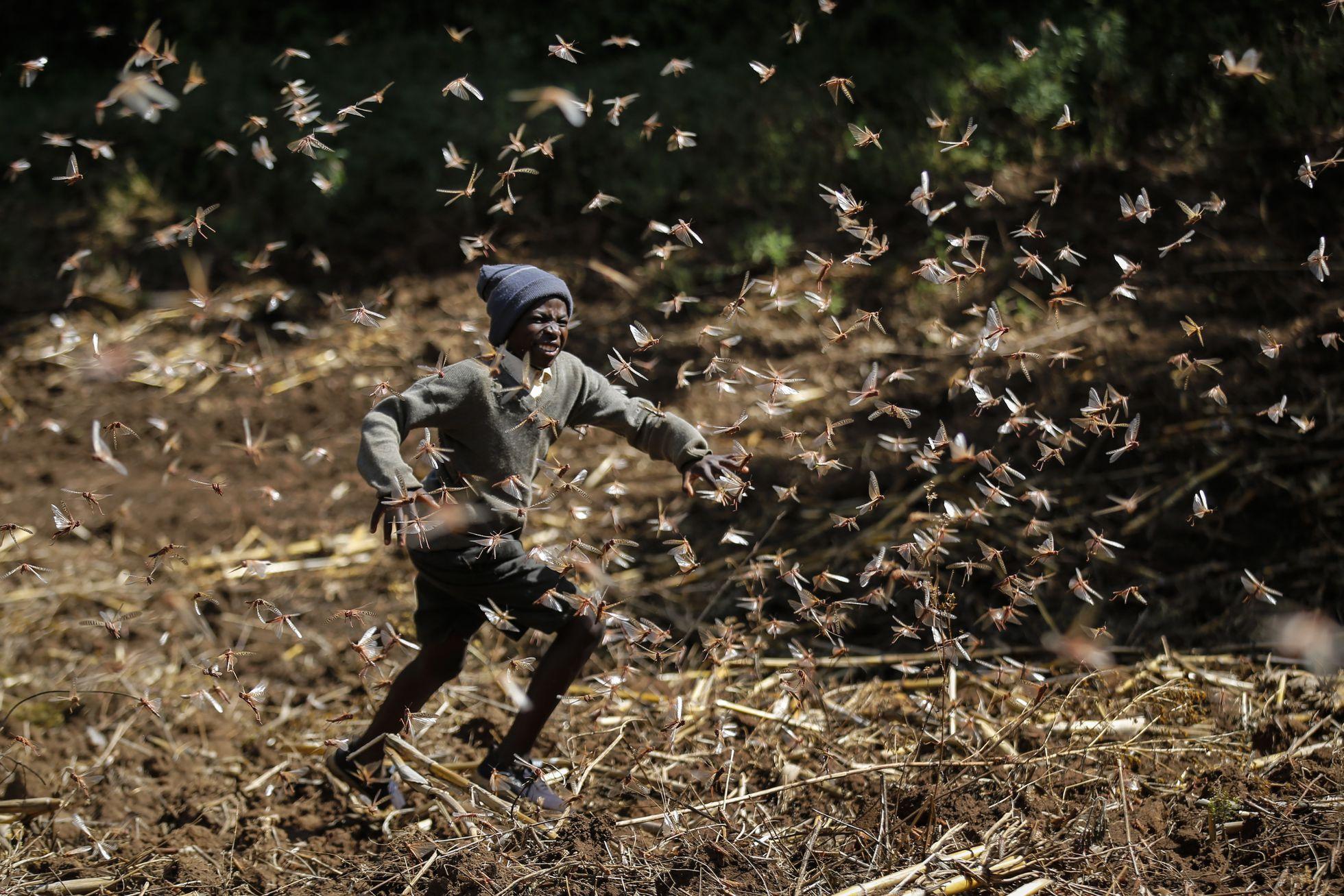 Locust swarms: How Kenya is controlling locust plagues ...