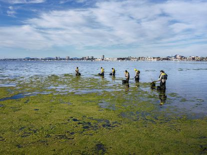 Members of a forest brigade remove algae from Villananitos beach.