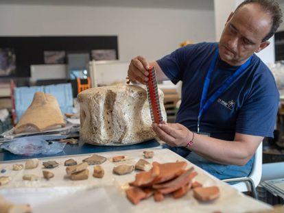 Archeologist Darío Bernal examines the vertebra of a whale found in the Baello Claudia archeological dig in Bolonia, Cádiz.