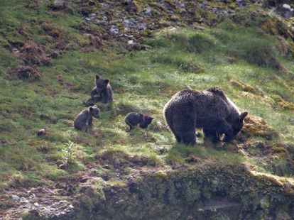 A female with her cubs in the western range.