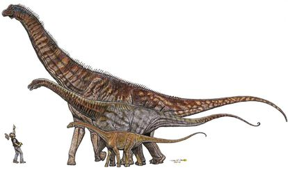 Brazil's mega-dinosaurs: Gondwanatitan faustoi (8 meters), Maxakalisaurus topai (13 meters) and Austroposeidon magnificus (25 meters).