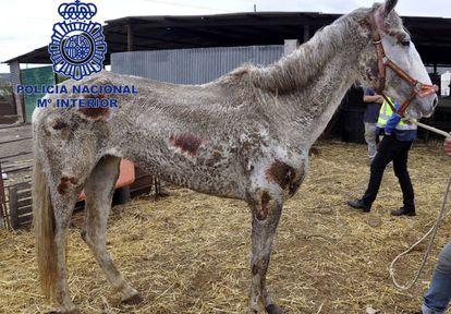 One of the sick and starving horses found on the property.