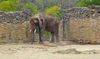 A file photo of Ruperta the elephant.