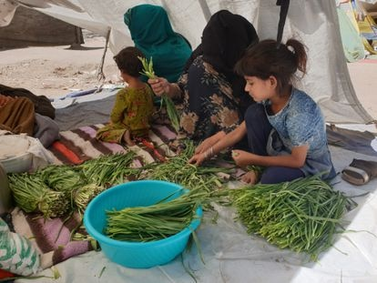 Parwana, whose husband died in a Taliban attack against his barbershop, washes vegetables with one of her daughters and a neighbor in the Kabul park where they are now living.