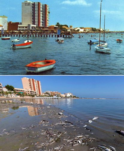 Above, a postcard picture of Villananitos beach in 1974 with Trucharte Castle in the background. Below, dead fish on Villananitos beach on October 13.