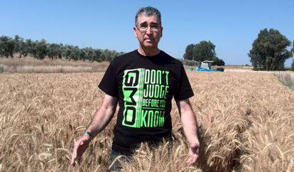 Francisco Barro, in a field of corn genetically engineered for sufferers of celiac disease.