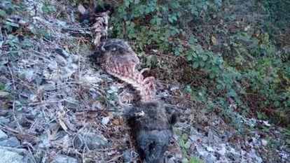 A dead bear found in early 2017.