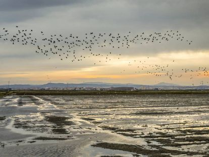 Birds fly over La Albufera natural park.