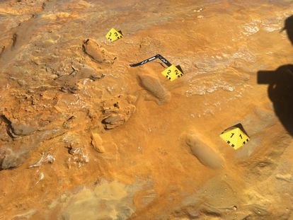 Footprints of an adult Neanderthal found in Matalascañas (Huelva) in the same area as tracks of newborn straight-tusked elephants.