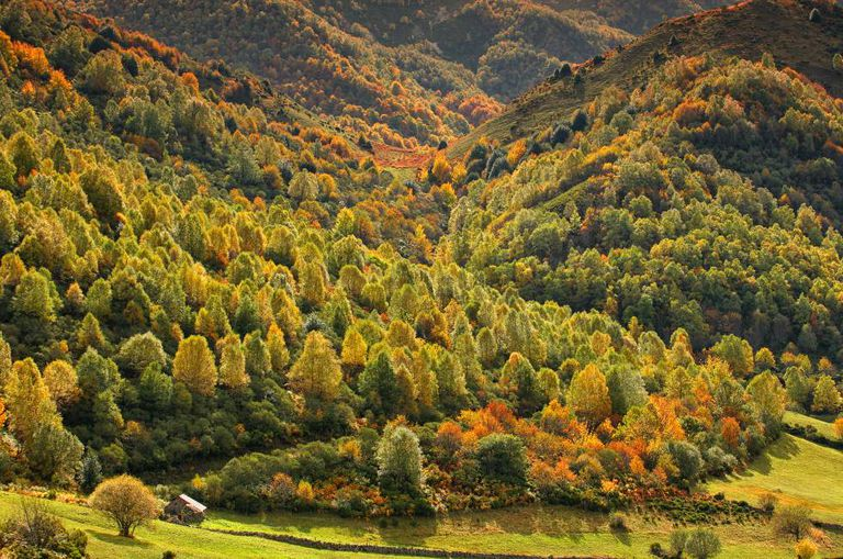 Autumn colors in the Fuentes del Narcea natural park in Degaña and Ibias, Asturias.