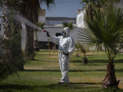A worker fumigates mosquitoes in Los Palacios gardens in Seville.