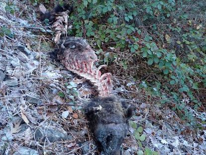 The remains of the animal found on Saturday.