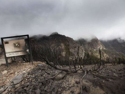 Fires destroyed a large section of the Garajonay national park in La Gomera.