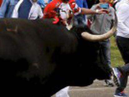 Death of 'Rompesuelas' in controversial annual hunt in Tordesillas, Valladolid, declared void after participants break regulations